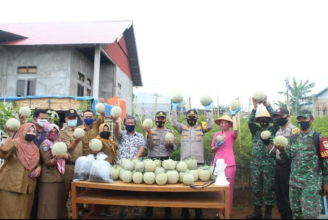 Polres Bengkulu Bersama Masyarakat  Panen Raya Buah Melon di Kampung Berseri