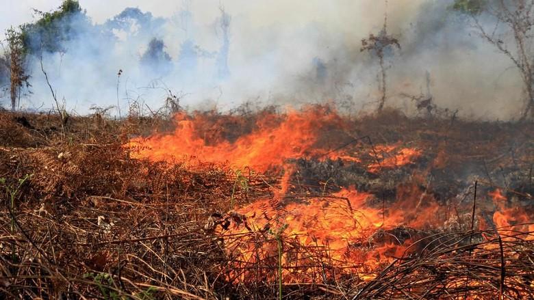 Lahan Kebun Terbakar, Titik Api terus Melebar