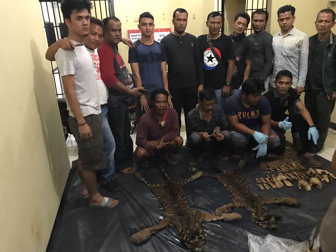 Jual Kulit Harimau, Warga Sumbar ditangkap Polisi