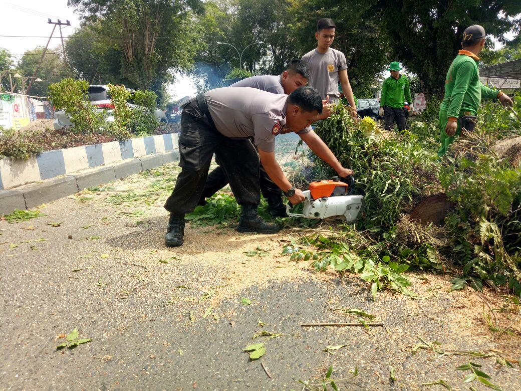 Unit SAR Sabhara Polda Bengkulu Evakuasi Pohon Tumbang