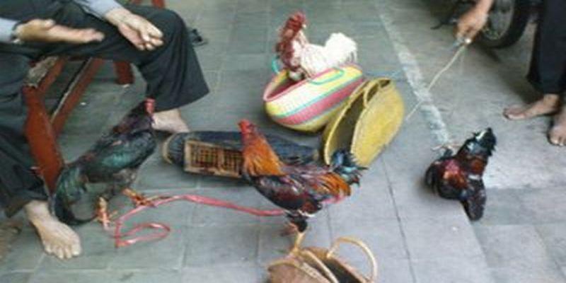 Gerebek Sabung Ayam, Polisi amankan 1 Ayam Jago
