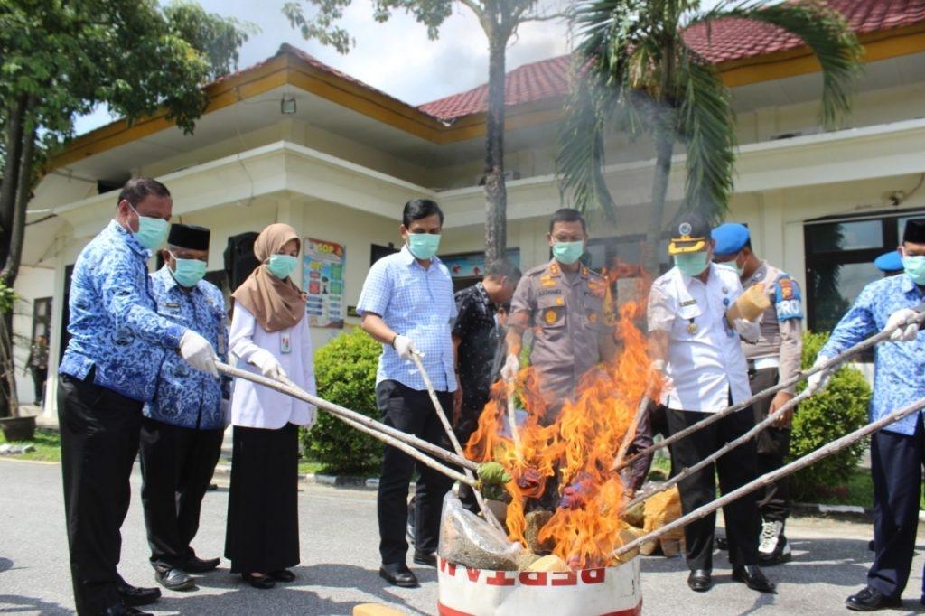 Selamatkan 30.000 Jiwa, Polres Pelalawan Musnahkan 30 Kg Ganja Kering