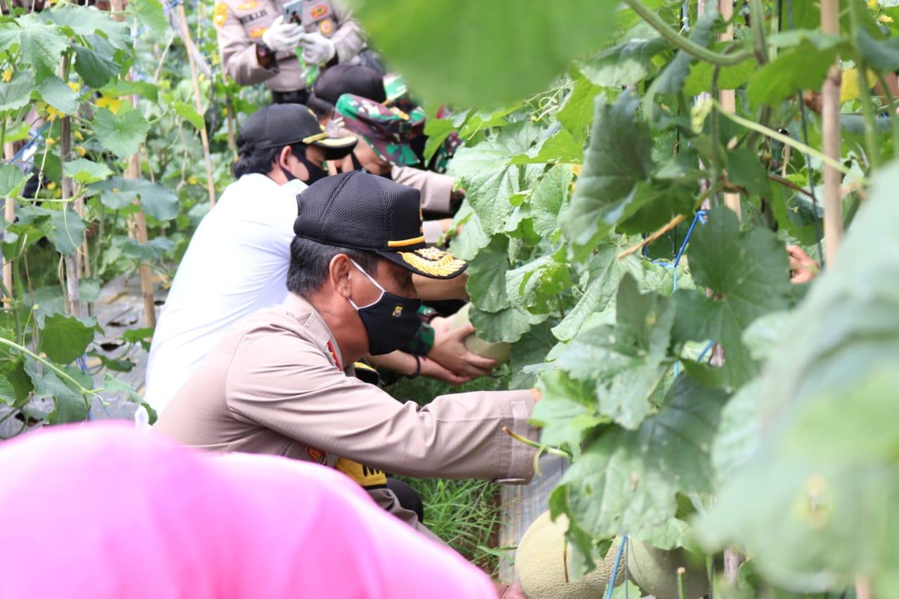Kapolda Bengkulu Lakukan Panen Raya Di Kampung Tangguh Binaan Bhabinkamtibmas Polsek Kampung Melayu