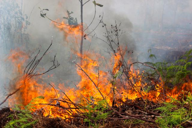 Kebakaran Lahan, 3 Unit Mobil Tanki Dikerahkan