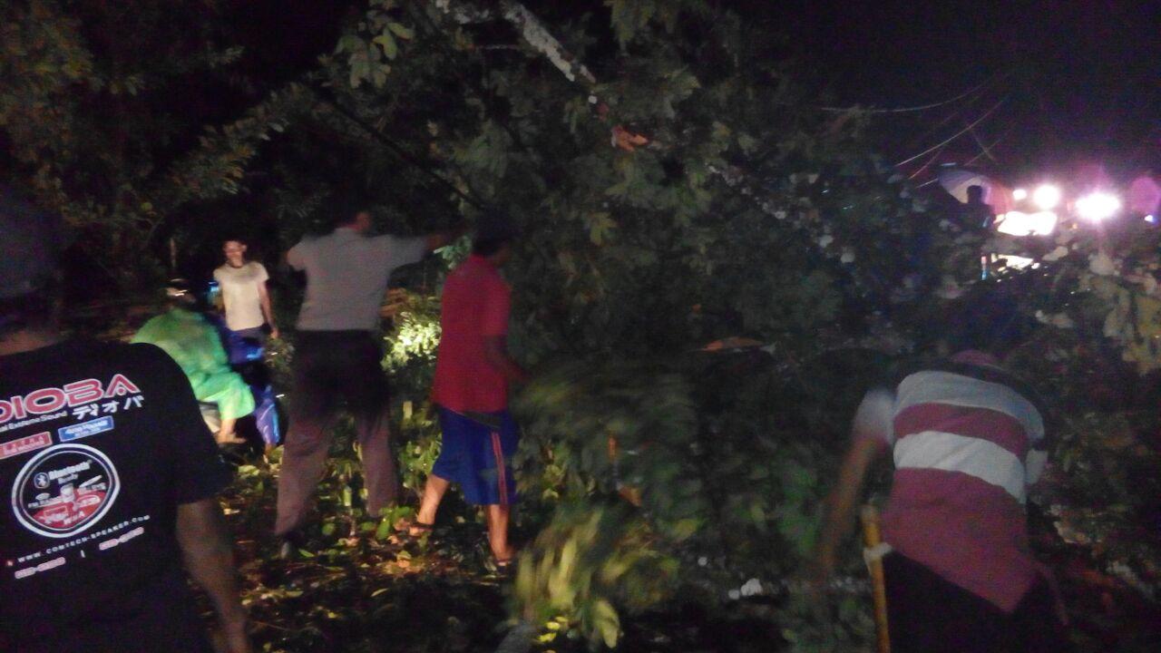 Polisi Bantu Warga Singkirkan Pohon Tumbang