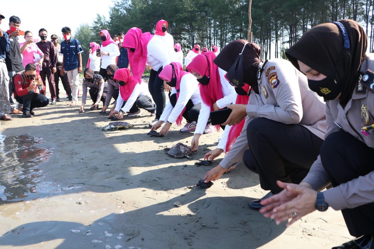 Polwan Bersama Bhayangkari Daerah Bengkulu Lepas Tukik dan Bhakti Sosial di Pantai Pekik Nyaring