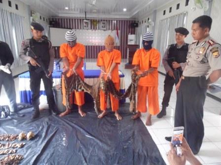 Polres Mukomuko Ungkap Sindikat Penjual Kulit Harimau
