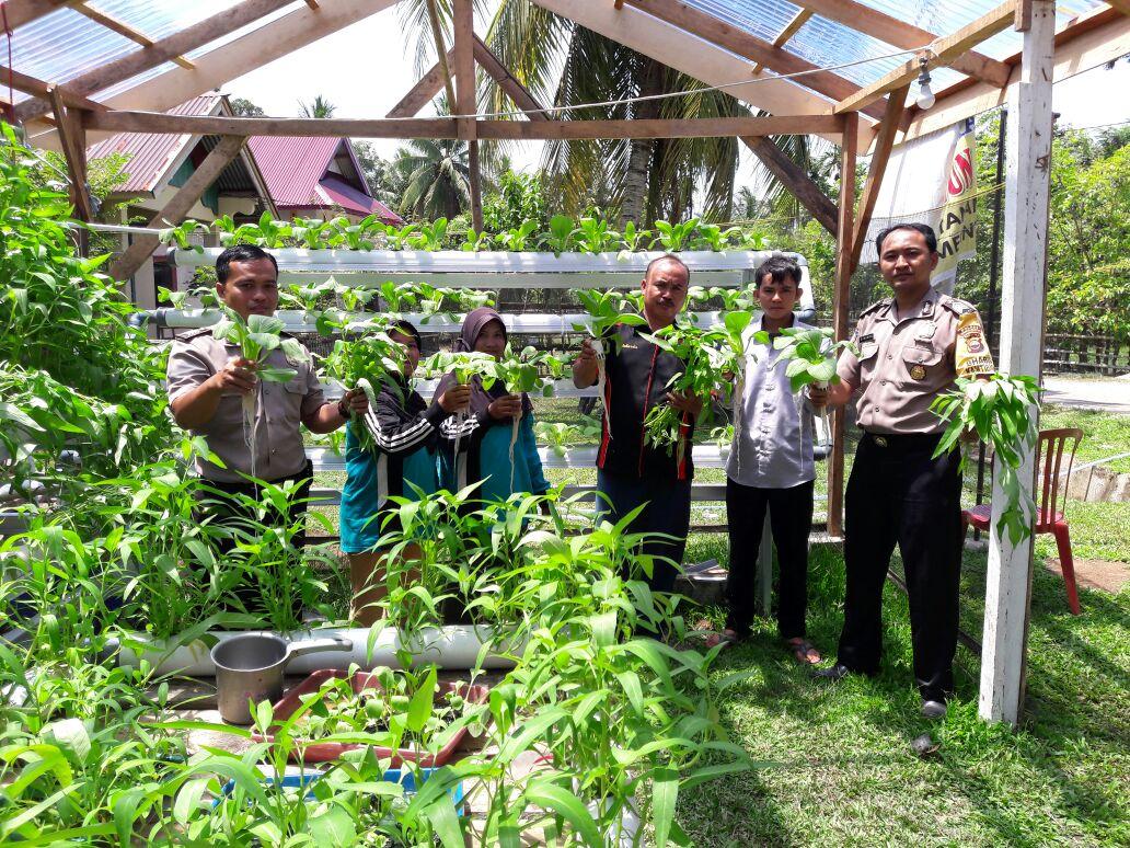 Budidaya Sayur Dilahan Sempit, Bhabinkamtibmas Kenalkan Tanaman Hidroponik