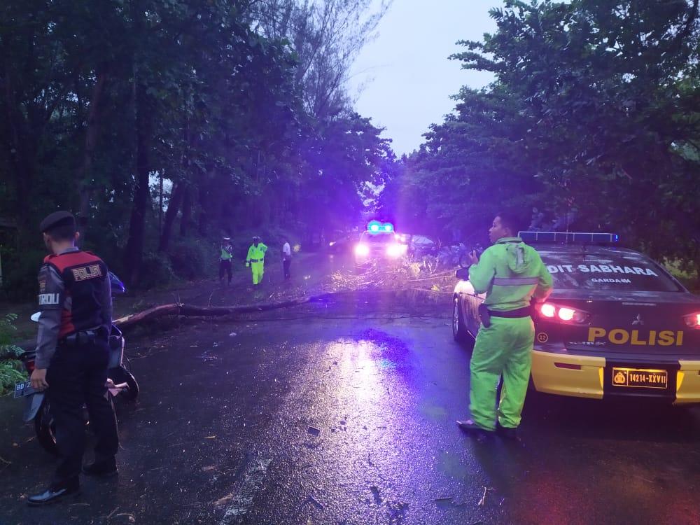 Akibat Hujan Angin, Mobil Warga Ringsek Tertimpa Pohon