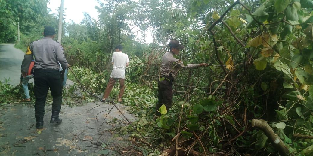 Anggota Polsek Kaur Utara Dibantu Warga Bersihkan Pohon Tumbang