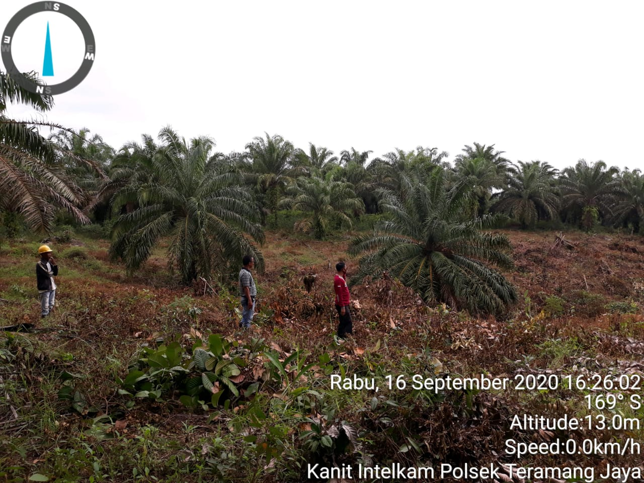 Lahan Ditebas Seluas 2 Hektar, Manager Pt. Agro Muko BTE Laporkan Ke Pihak Yang Berwajib