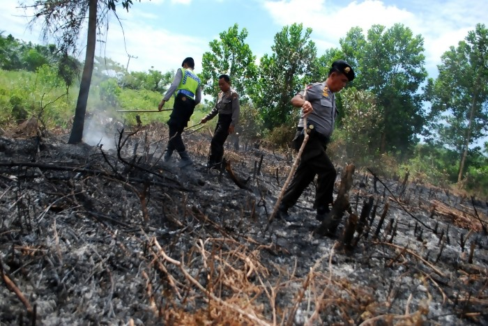 Dishut siap Bantu Polisi Selidiki Pembakaran Hutan