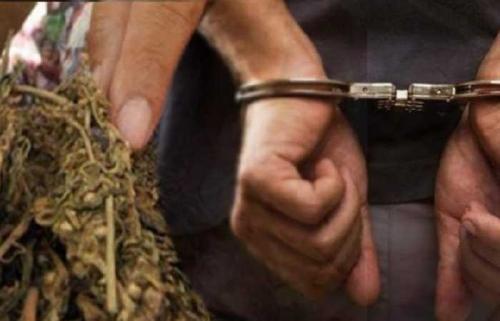 Bawa Ganja, Unit Patroli Polres Rejang Lebong Tangkap 2 Warga Lubuklinggau