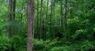 Polisi Pantau Keberadaan Dua pemerkosa Yuyun di dalam Hutan