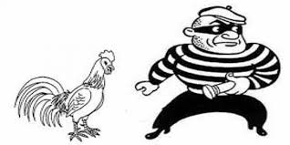Curi Ayam, 4 Pelajar Di Tangkap Polisi