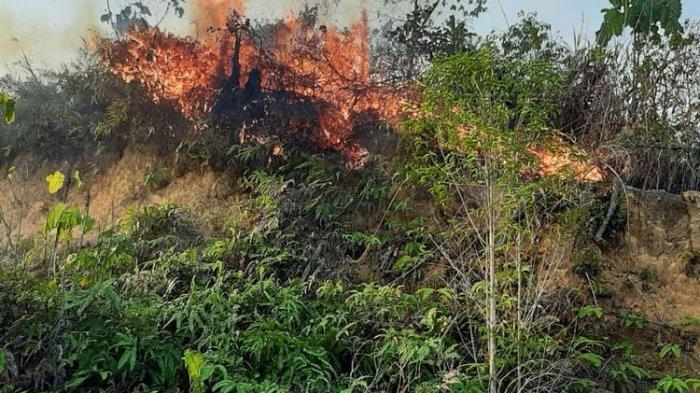 Polisi Amankan Terduga Pembakaran Lahan Di Muko-Muko