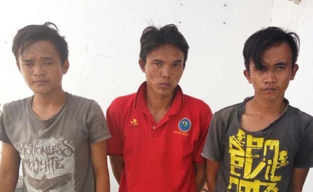 Maling Sawit, 3 Pemuda di Bekuk Polisi